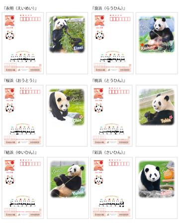 パンダ年賀状はがき2021アドベンチャーワールド
